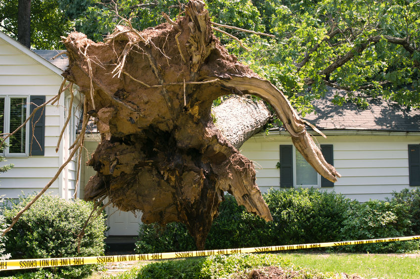 tree roof damage can be repaired by a Fort Worth roofing contractor